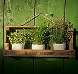 Die Stadtgärtner Rustikales Gartenregal aus Zwiebelsieb ++ Ideal für -Töpfe ++ für Drinnen und Draußen (Breite Version)